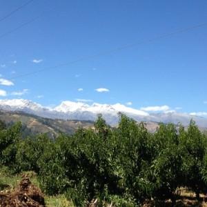 Wood_Peru_Cordillera